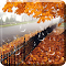 Maple Droplets Live Wallpaper 1.1.4 Apk