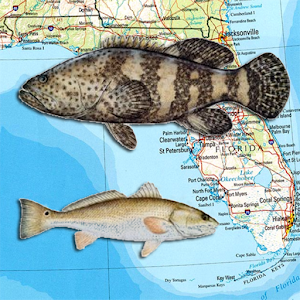 Florida reef fishing scuba map android apps on google play for Best fishing apps