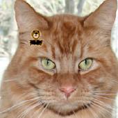 Cat Mole Mash