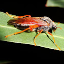 Sawfly on eucalyptus