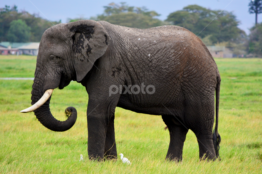 Elephants Side View Other Mammals Animals Pixoto Collection of the best elephant_side_profile wallpapers. pixoto