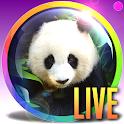 PANDA Webcam - Live Zoo Pandas icon