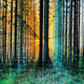 I c trees by Stine Engelsrud - Abstract Patterns ( ic_trees, unitedbytrees, treescollection, momentsinthesun, nature_perfection, nature_obsession )