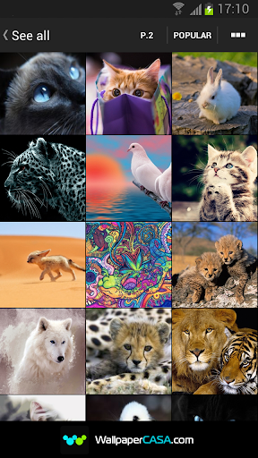 高清動物圖庫
