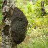 Termite Home