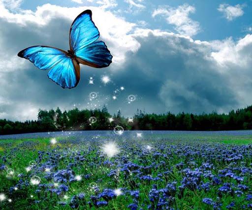 【免費媒體與影片App】3D Butterfly-APP點子