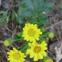 Fall Wild Flower
