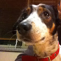 Beautiful dog Nuna