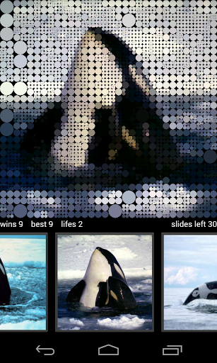 Guess Killer Whale Pictures HD