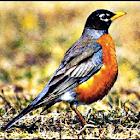Robin Soundboard Effects icon