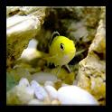 3D Ocean fish HD wallpaper icon