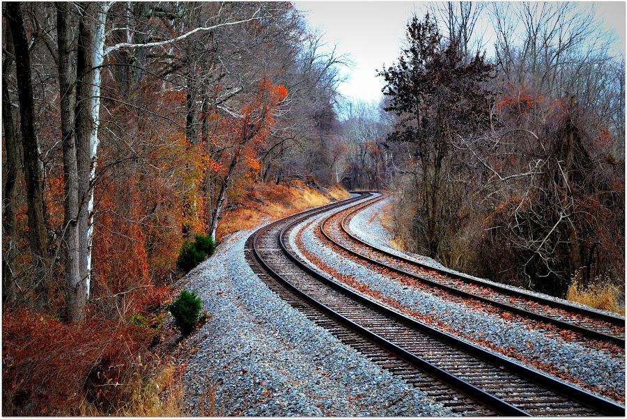 Rail Tracks Patapsco. by Denny Paul - Transportation Railway Tracks ( rail tracks, color, fall, maryland, curves,  )