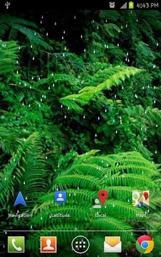 Rain Forest HD Live Wallpaper