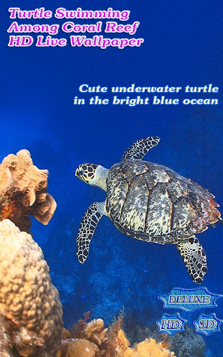 Turtle Swimming Coral Reef HD