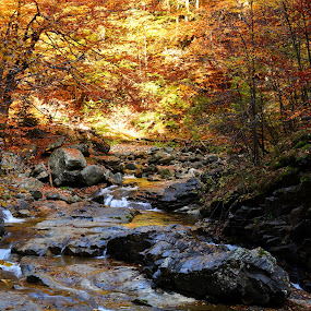 Gold rush by Moca Marius - Nature Up Close Trees & Bushes ( fall, color, colorful, nature,  )
