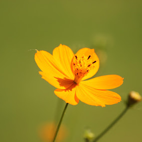 She Is Smilling by Megh Shah - Flowers Single Flower ( #smile #love #shadow #yellow #love )