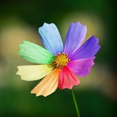 3D Colorful flower