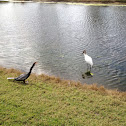 Wood Stork and Anhinga