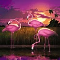 Pink Flamingos n Exotic Sunset logo
