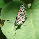 88 - Butterfly