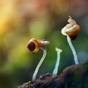 The rainbow hill by Dhimas Prastowo - Digital Art Animals