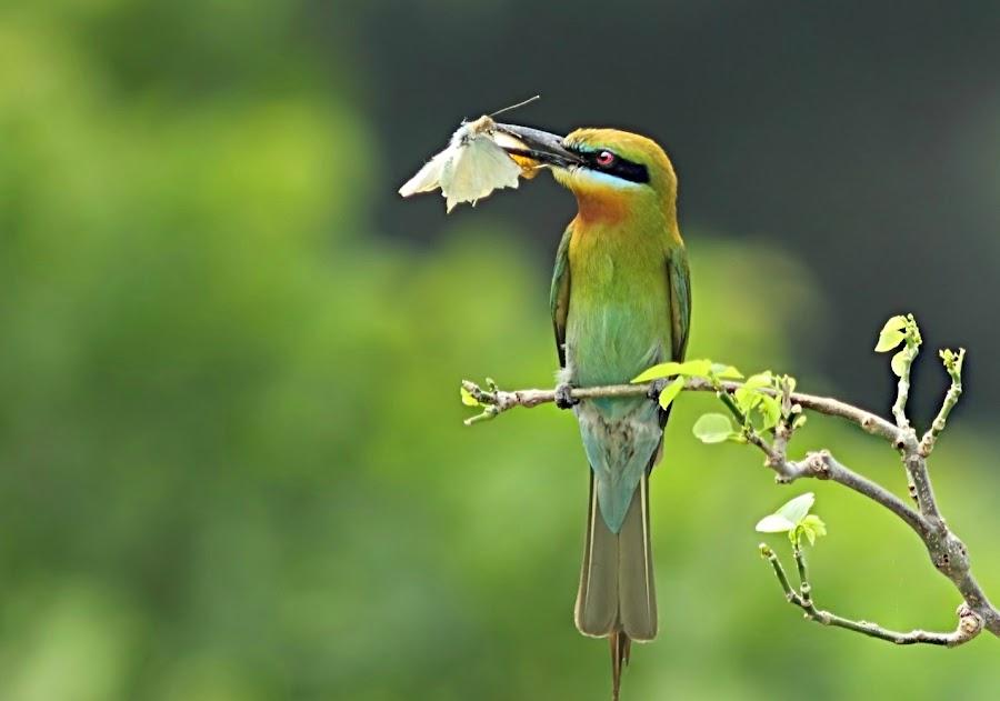 by Prasanna Bhat - Animals Birds