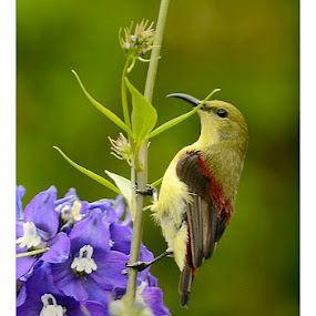 Birds by Madhu Payyan Vellatinkara - Animals Birds ( sparrows, nikon, birds )
