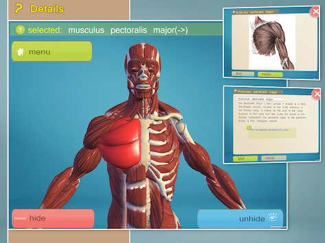 Download Easy Anatomy 3dlearn Anatomy Apk Latest Version App For