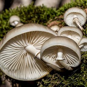esporas by Miguel Lopez De Haro - Nature Up Close Mushrooms & Fungi ( Mushroom )