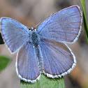 Anna's Blue