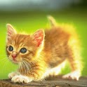 Cat Meow Meow Ringtones