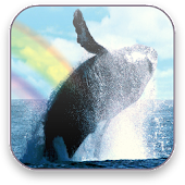 Whales Free Video Wallpaper