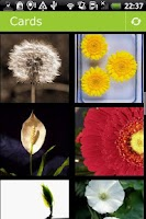 Screenshot of Flowers Postcards