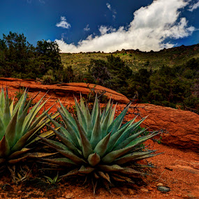 Twin Aloes by Marilyn Magnuson - Landscapes Mountains & Hills ( clouds, plants, vista view, red rock country, landscape )
