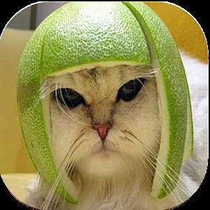 Apk file download  Lustige Tierbilder 1.0  for Android 1mobile