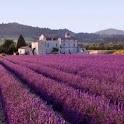Provence icon