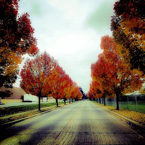 Autum Road by Lori Louderback - Instagram & Mobile Android (  )
