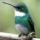 Amazing Hummingbirds Wallpaper icon