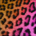 Pretty Cheetah Keyboard Skin icon