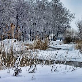frigggggg by Otetea Ovidiu - Landscapes Weather