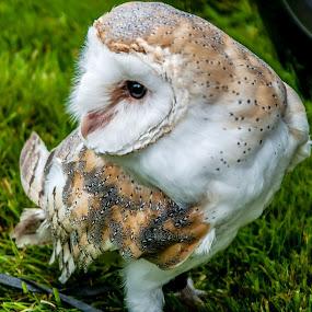 by Steve Evans - Animals Birds