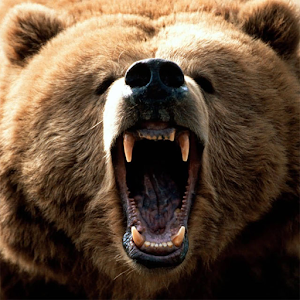 Bears Jigsaw Puzzles for PC and MAC
