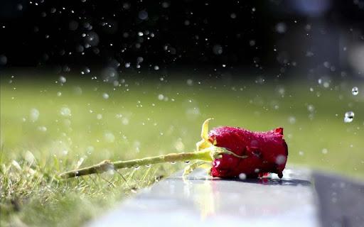 银河S4雨中玫瑰