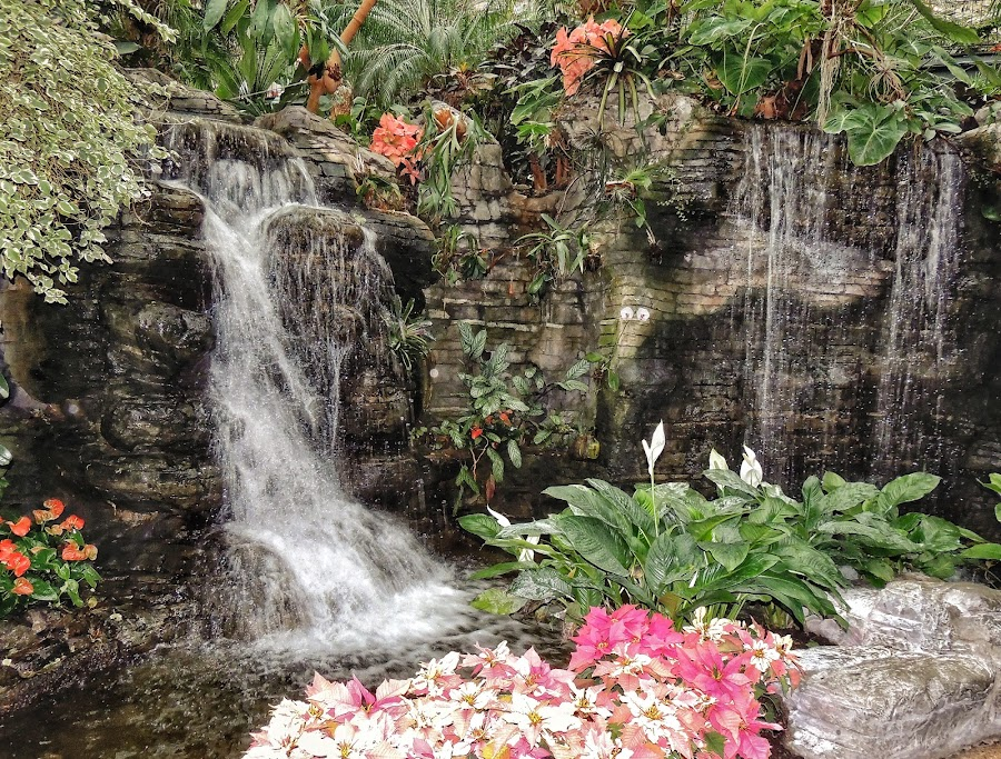 Waterfall by Penny McWhirt - Nature Up Close Water ( waterfall, rock, flowers, garden,  )