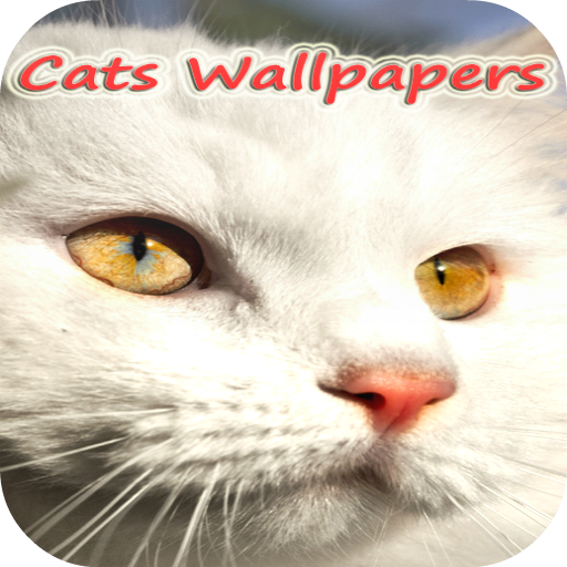 Galaxy s2 Cats live Wallpapers 個人化 App LOGO-APP試玩