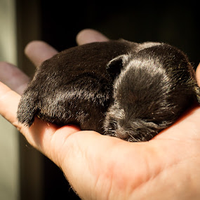 Hard Life by Jim Anderson - Uncategorized All Uncategorized ( hand, gog, puppy, sleep, premature )