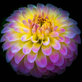 by Randy Sampson - Flowers Single Flower (  )