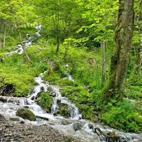 Green by Lejla Hadziabdic - Landscapes Forests ( #stream #alps #forest #austria #water )