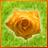 Flore logo
