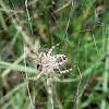 Community Web Spider